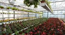 Beet- & Balkonpflanzen_11