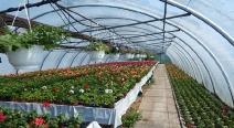 Beet- & Balkonpflanzen_1